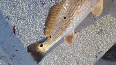 Rockport Fishing Guide Redfish Spots