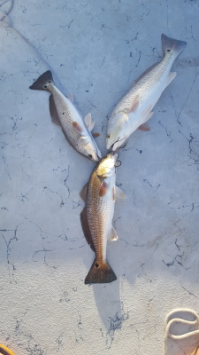 Rockport Fishing Guide Redfish Limit