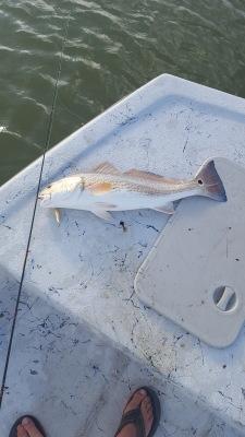 Rockport Fishing Guide Redfish