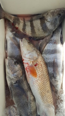 Rockport Fishing Guide Drum and Redfish