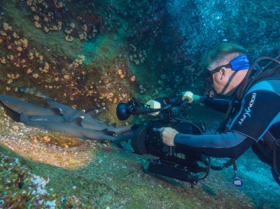 Filming whitetip reef sharks Roca Partida, Socorro, Mexico
