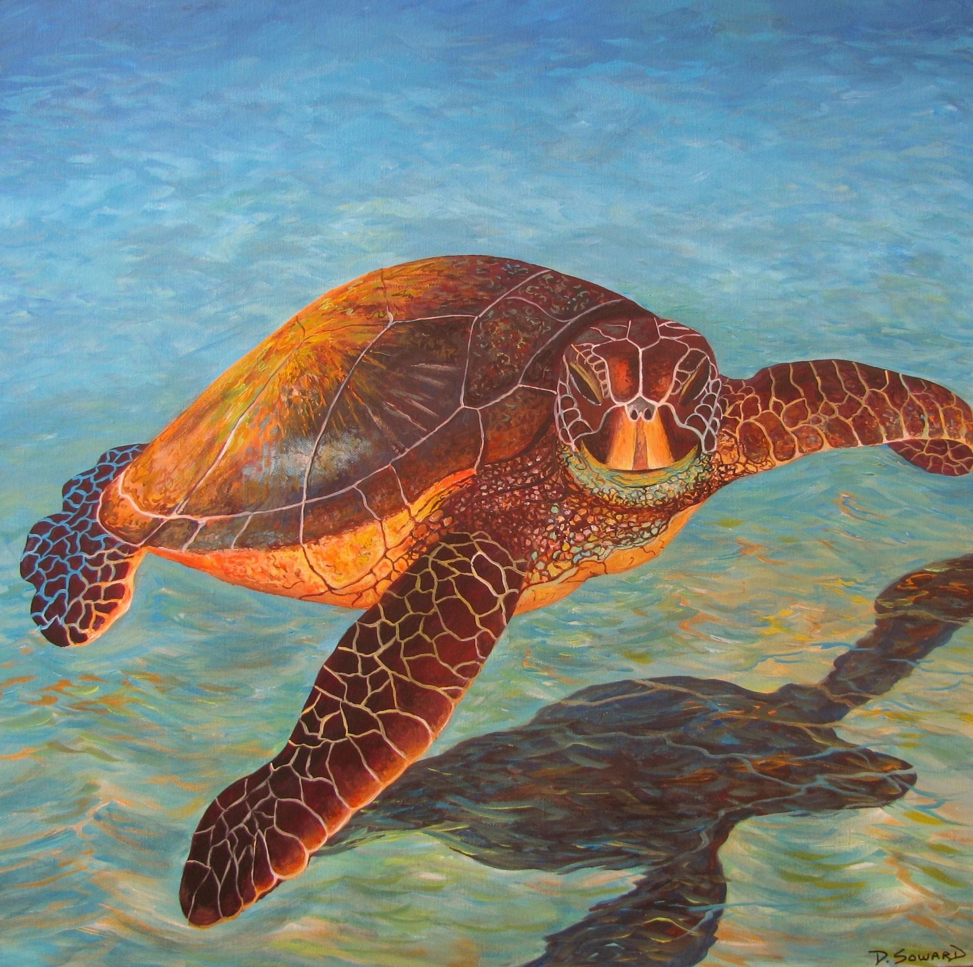 Sea Turtle (24 x 24)