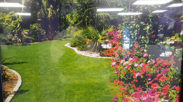 yard landcape