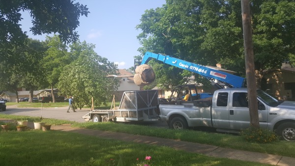Tree Installation