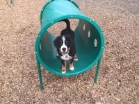 Puppy training, dog park orientation