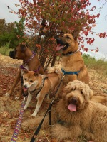 Dog hikes, leash training