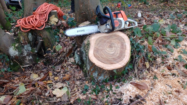 Chainsaw and sweet chestnut stump