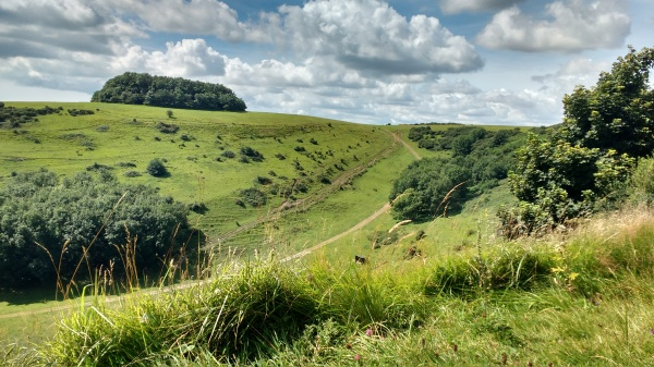 Grassland near Tolsford