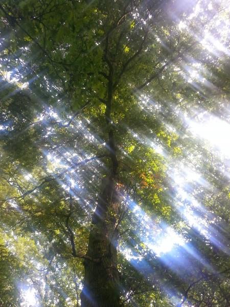 Tree in Rose Hill Woods, Sittingbourne