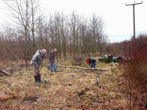 Volunteer woodland management session in Sittingbourne