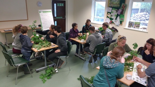 Indoor tree identification session