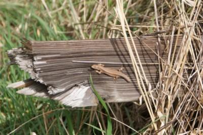 Lizard basking on a log