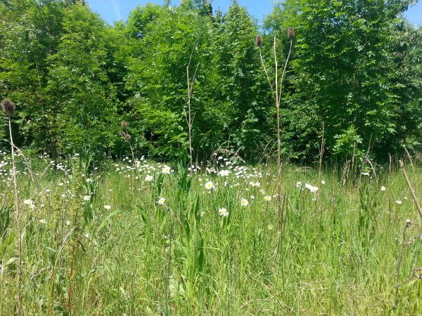 The Meads Community Woodland