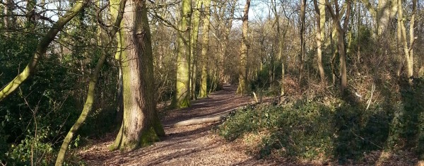 Rose Hill Woods