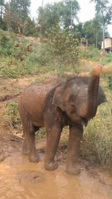 Lychee the elephant