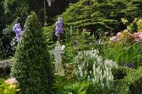 Blooms Gardening - Wadhurst Flower Bed Maintenance