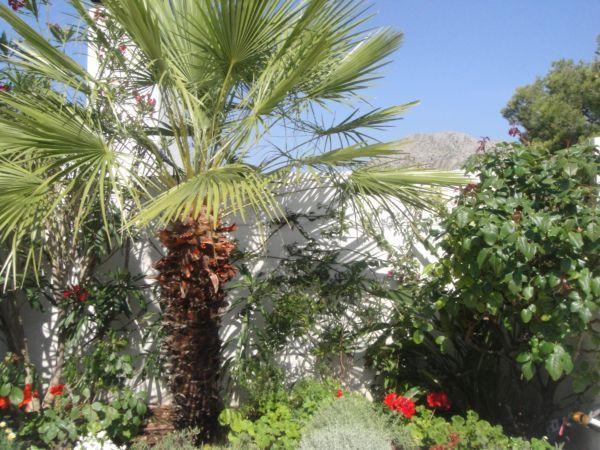 Mature roof garden