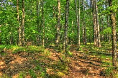 Arbor Day Today