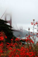 Golden Gate bridge in fog in San Francisco, California, USA