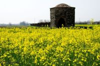 Old stone building in yellow rapeseed field outside of Udine in Italy