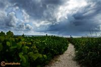 Nature walk on the sandy beach to the ocean in Delray Beach, Florida, USA