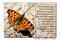 butterfly with quote