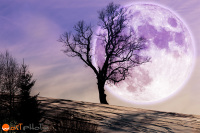 Full moon composite with tree on snow field