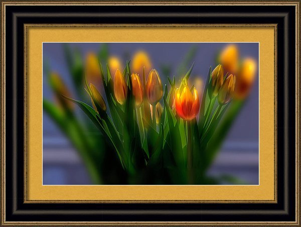 Framed photo of tulips by wolfgang stocker