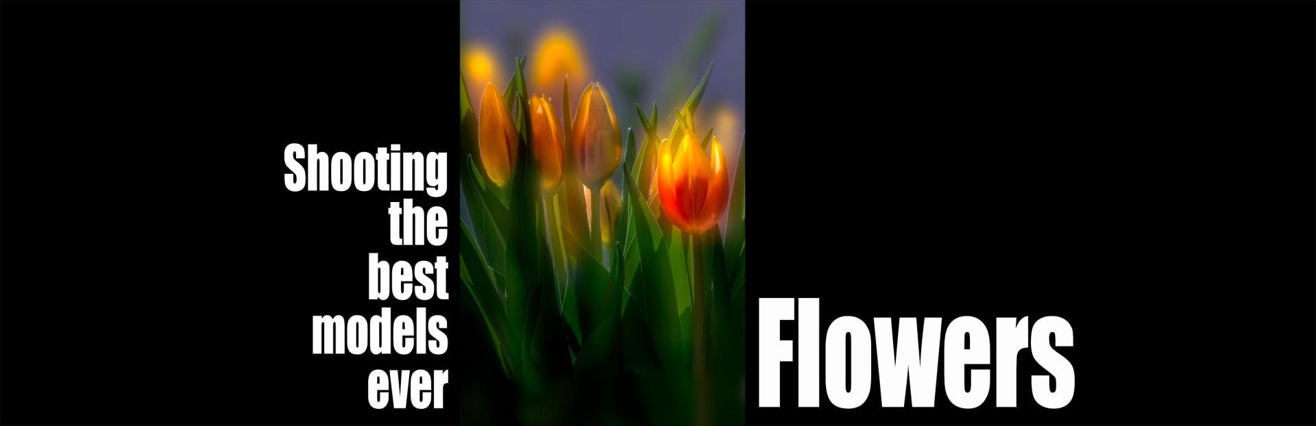 Banner wostphoto categorie portfolio_flowers