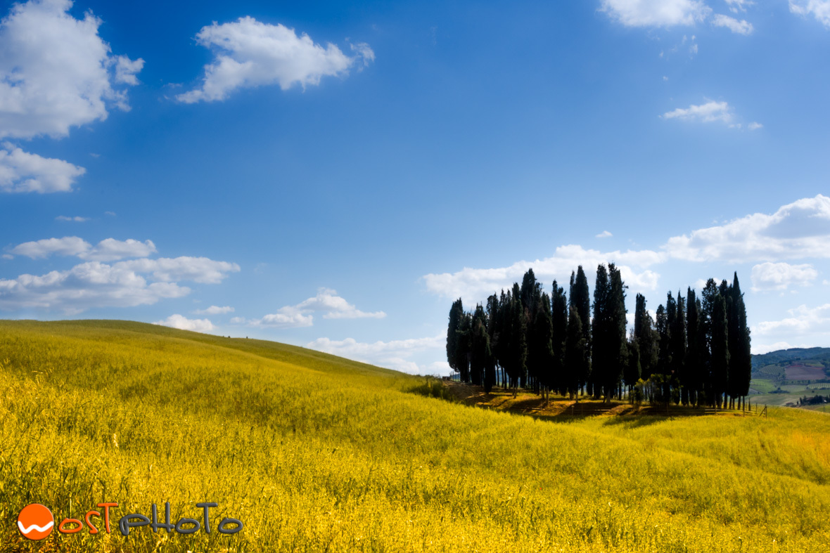 Tuscany, Val d'Orcia landscape, famous group of cypresses