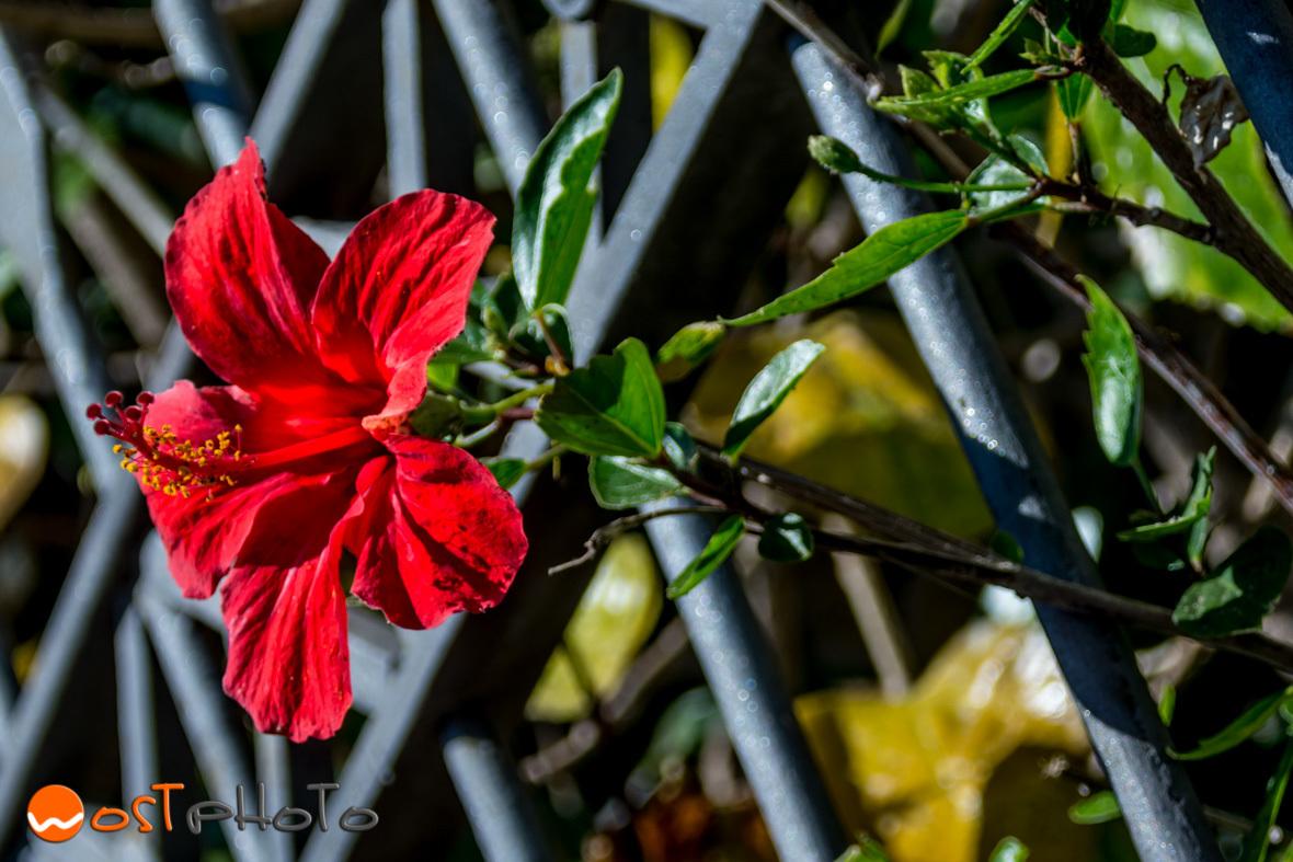 Flower in Capri
