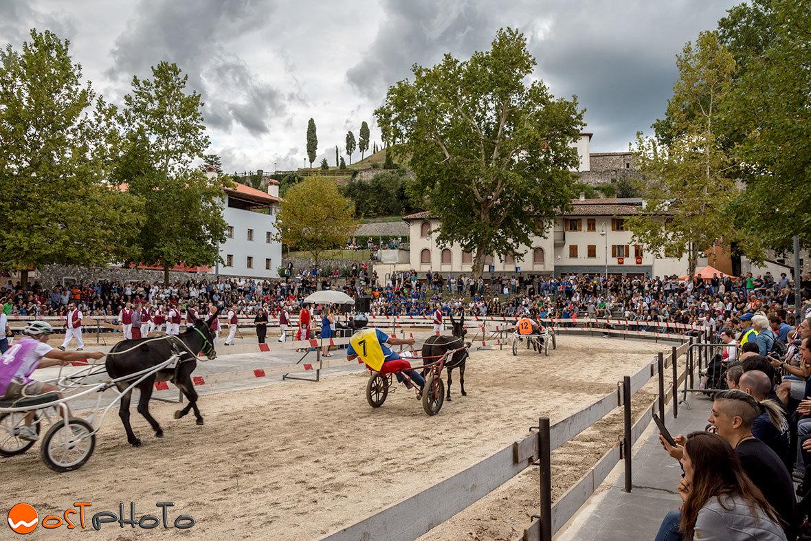 Corse di mus, the donkey race in Fagagna/Friuli, Italy