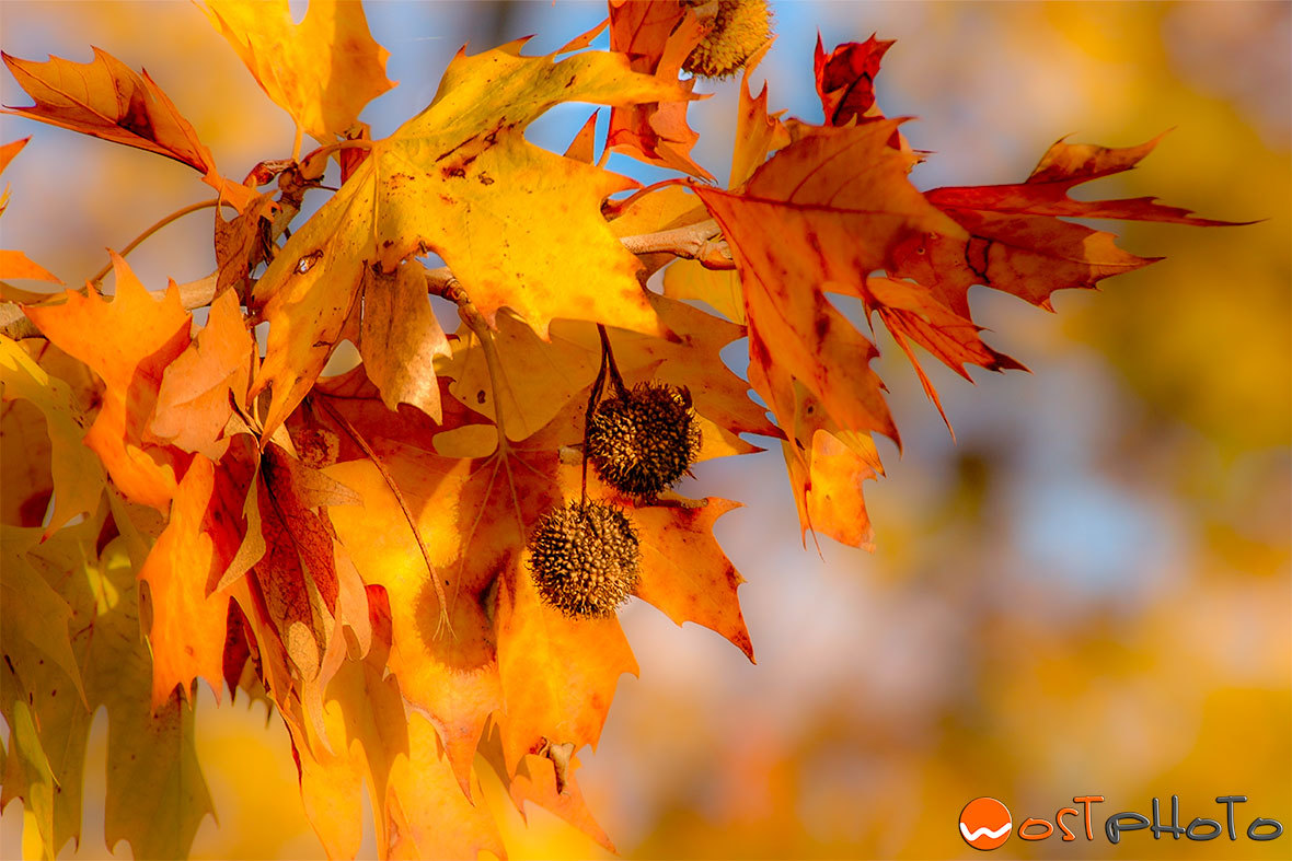 Tree leaves in fall colors