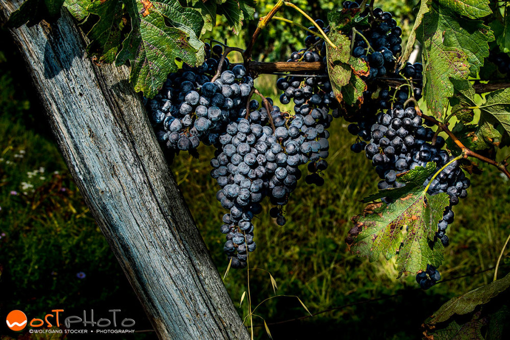 As older the grapes as sweeter the wine