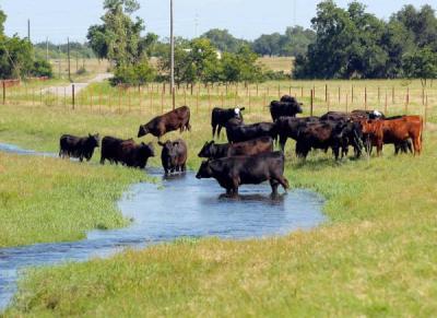 Pasture Rangeland Forage - PRF