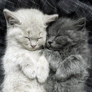 Hands Free Cuddling