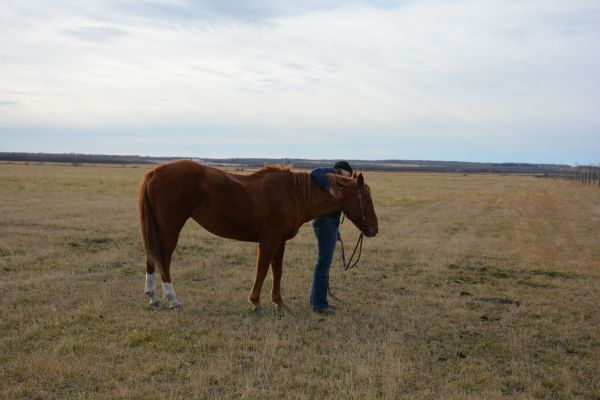 An Introduction to Me and My Horses