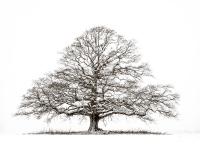 tre skog hvitt sort