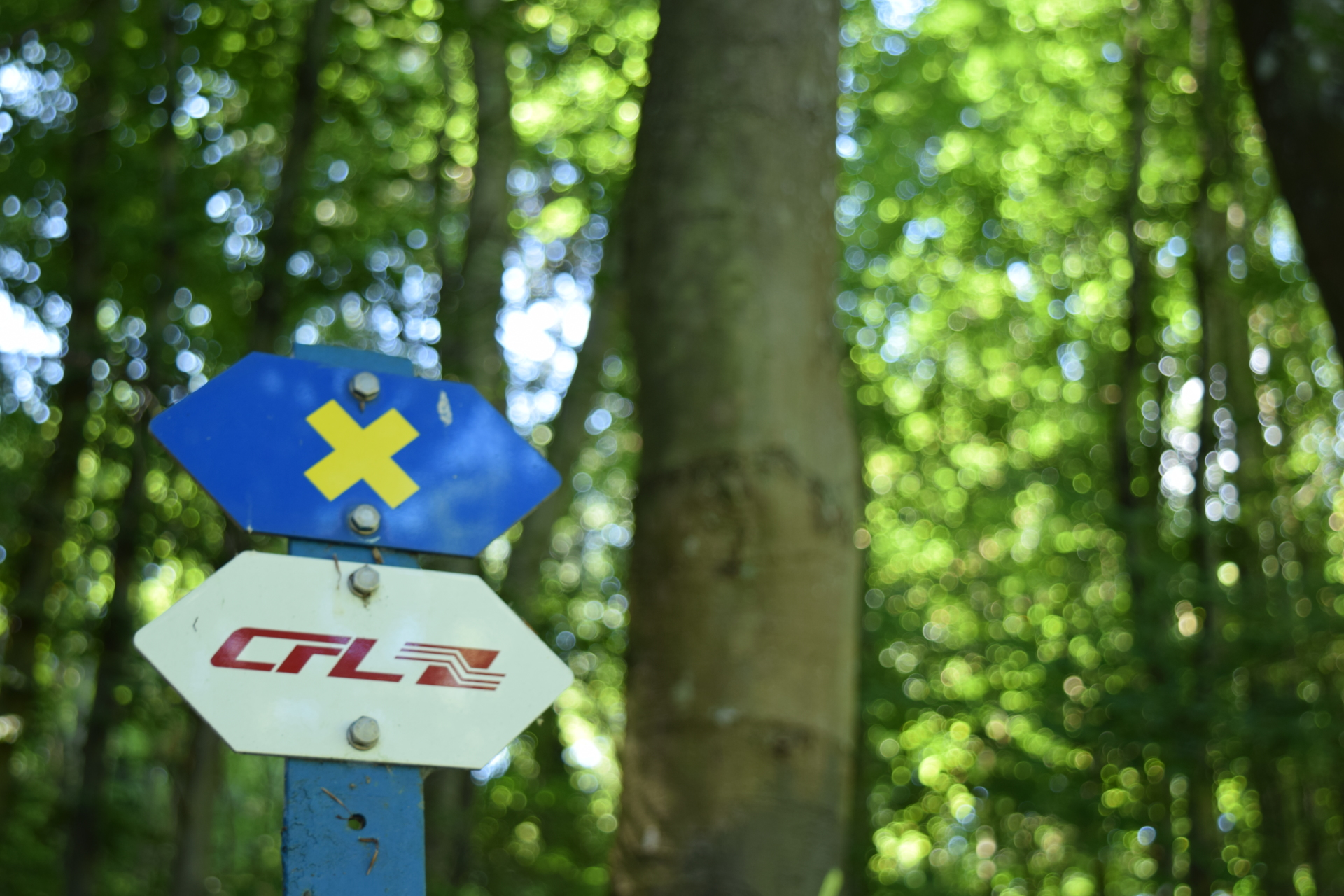 A signpost along the CFL pathways