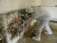 Mold Contamination Cleanup