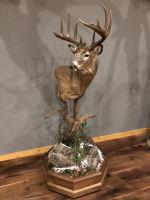 Saskatchewan Whitetail Buck