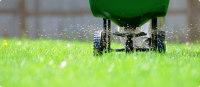 Overseeding, Fertilizing
