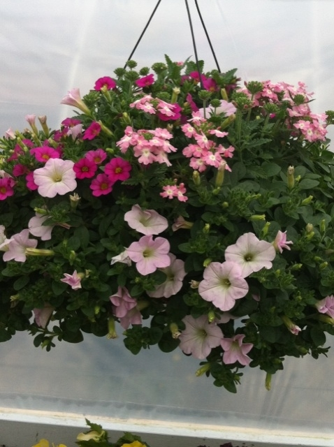 Basket full of Blooming