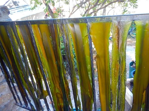 Local Harvest Seaweed