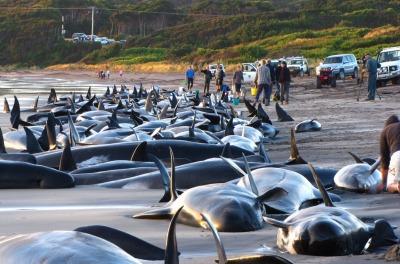 Why Whales Beach