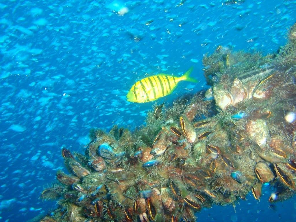 Angel Diver Perhentian