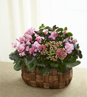Pink Assortment Plants