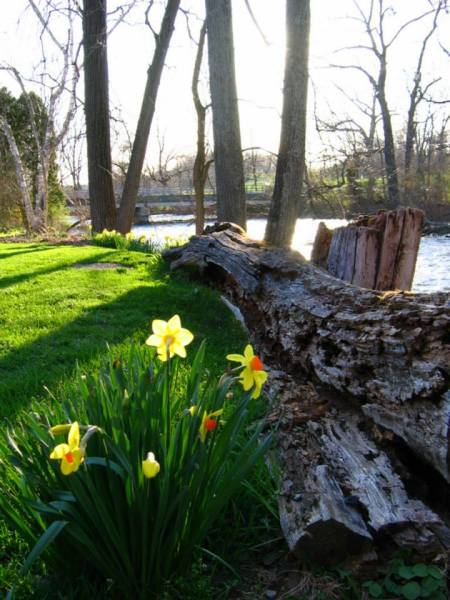 Log by river with two flowers