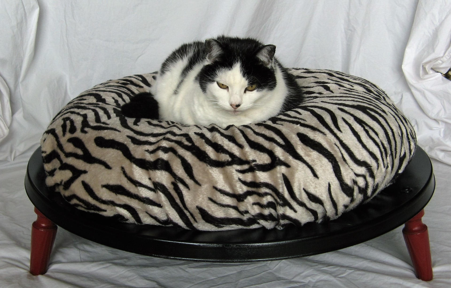 Recycled Satellite Pet Bed