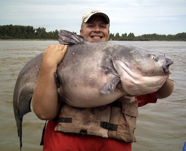 Ms river catfishing catching trophy catfish in kentucky for Mississippi river fish